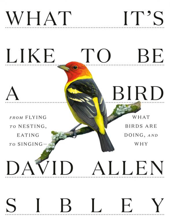 What it's like to be a bird : from flying to nesting, eating to singing -- what birds are doing, and why