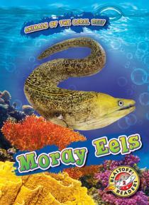 Moray eels